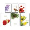 Тетрадка Nature 100 листа